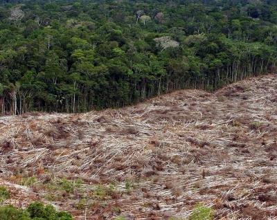 Imagen de una tala ilegal en la amazonía brasileña. EFE/ARCHIVO/Marcelo Sayão